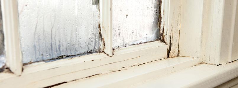 condensation window damage